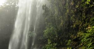 Twin Falls in Springbrook National Park, Australia. Twin Falls in Springbrook National Park, Queensland, Australia stock video