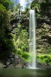 Twin- Fallswasserfälle Springbrook Stockbild