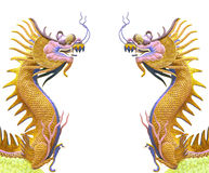 Twin golden dragon use as chinese background Royalty Free Stock Image