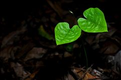 Twin hearts Stock Images