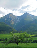 Twin hills Stock Image