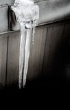 Twin icicles melting Royalty Free Stock Image