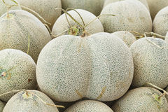 Twin Japanese rock melon Stock Images