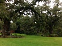 Twin oaks Stock Photo