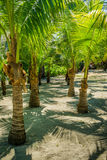 Twin Palm Tree Row Royalty Free Stock Image