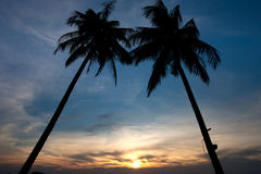 Twin Palm tree sunset Royalty Free Stock Photography
