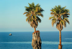 Twin Palm Trees. Two palm trees in a bright blue sky over looking the ocean Royalty Free Stock Images