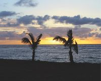 Twin Palms at Hawaiian Sunset. The sun offers a stunning background to the iconic image of Hawaii--a palm tree Stock Photo