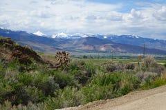 Twin Peaks, Challis, Idaho stock photography