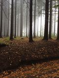 Twin peaks. Forest trees nobody footpath path twin peaks Stock Images