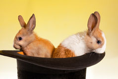 Twin Rabbits In A Top Hat Stock Photos