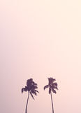 Twin Retro Palm Tree Silhouettes Royalty Free Stock Photo
