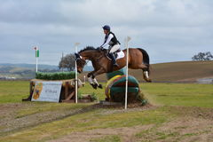 Twin Rivers Ranch Cross Country Eventing Jumping Horse. Brown horse jumping over a duck into the water complex at Twin Rivers Ranch, Paso Robles California stock photo