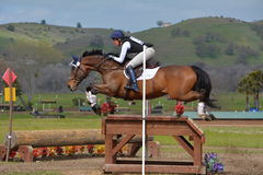 Twin Rivers Ranch Cross Country Eventing Jumping Horse. Brown horse jumping over a large table at Twin Rivers Ranch in Paso Robles, California royalty free stock photo
