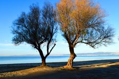 Twin trees at the beach. Tamarisk trees in front of blue Aegean Sea royalty free stock image