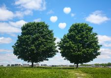 Twin Trees grow and die together as a couple. Valentines day royalty free stock photography