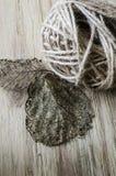 Twine and leaf skeletons on wood Stock Image
