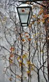 Twiner and lantern on the stone wall stock photos