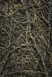 Twining leafless creeping branches Royalty Free Stock Image