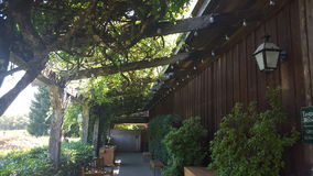 Twinkle lights under a canopy of branches. Breezeway outside the tasting room of a winery royalty free stock images