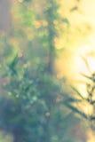 Twinkling lights vintage blurred natural bokeh Stock Images