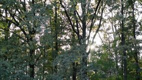 Twinkling sunshine with sun rays coming through green foliage. Beautiful, twinkling sunshine with sun rays coming through fresh, vibrant, lush, spring foliage in stock video footage