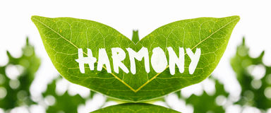 Twinned green leaves with the word - Harmony. Artistic mirrored symmetrical fresh green leaves with the word - Harmony - painted in white showing the texture and Stock Image