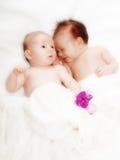 Twins. Newborn, one sleeping, in white Stock Photography