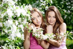 Twins royalty free stock images