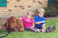 Twins and a Calf. Fraternal twins with a newborn calf stock images