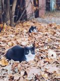 Twins cats sitting in the leaves. royalty free stock photo