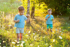 Twins in the flower meadow Stock Images