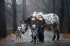 Twins girls portrait with Appaloosa horse and Dalmatian dogs. In rainy autumn park stock photography