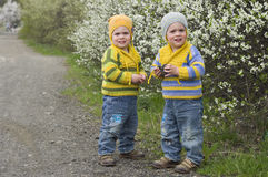 Twins near the blossoming shrubs. Identical twins on the gravel road near the blossoming shrubs. Season - spring. Boys dressed in the same stripy jumper and hats Royalty Free Stock Image