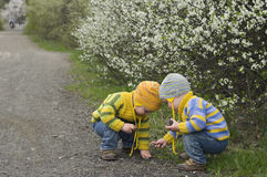 Twins play with stones. Identical twins on the gravel road near the blossoming shrubs. Season - spring. Boys dressed in the same stripy jumper and hats in Royalty Free Stock Images