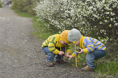 Twins squatted to play with stones. Identical twins on the gravel road near the blossoming shrubs. Season - spring. Boys dressed in the same stripy jumper and Stock Photo