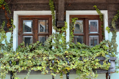 Twins wooden window decorated by plants Stock Photos