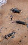 Twintig millimeter bestede shells van het pantser doordringende kanon in het zand stock afbeeldingen