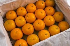 Twintig oranje mandarins De rijpe grote mandarijnen liggen in een container met een verpakkings Witboek Het oogsten van citrusvru Stock Foto's