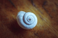 Twirled seashell snail Stock Photography