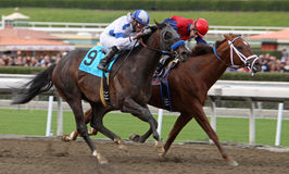 Twirling Candy Wins The Malibu Stakes Royalty Free Stock Photos