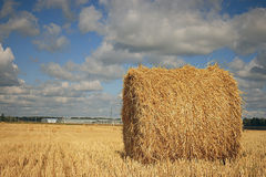 Twist hay in field Royalty Free Stock Image