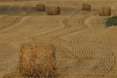 Twist hay in field Royalty Free Stock Photos