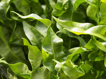 Twist leaves Stock Photography