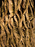 Twisted bark Royalty Free Stock Photos