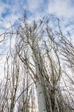 Twisted Branches Royalty Free Stock Images