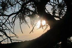 Twisted Desert Juniper Silhouette by the Twilight Sun royalty free stock photography