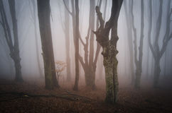 Twisted enchanted trees in a mysterious forest Royalty Free Stock Photo