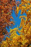 Twisted Fall Leaves I Royalty Free Stock Photos