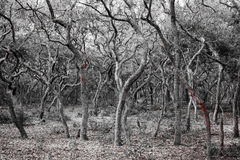 Spooky Twisted Forest Stock Photos